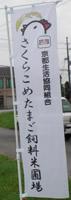 20110802_nobori3.jpg