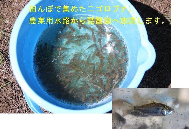 014-JAkitabiwako.jpg