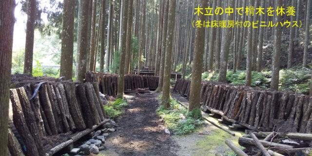 5-榾木の休養.jpg