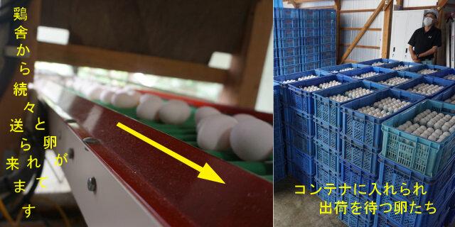 4-集卵.jpg