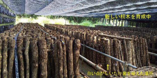 3-榾木の育成.jpg