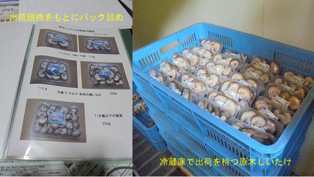 7-出荷規格と出荷待ち椎茸.jpg